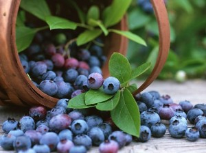 Image source: http://www.wallcoo.net/photography/fruit_Blueberry_bilberry/fruit_Blueberry_bilberry_wallpapers_1DU002.html
